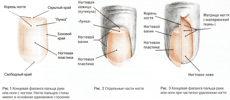 Опасные заболевания ногтей ног