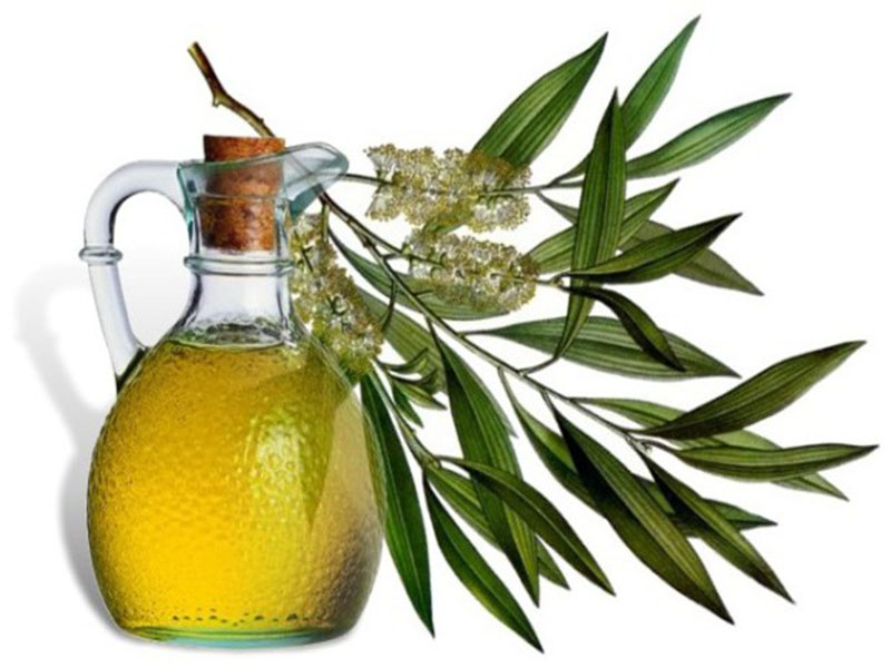 масло чайного дерева от паразитов как принимать