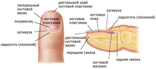 Как быстро вылечить вросший ноготь на ноге